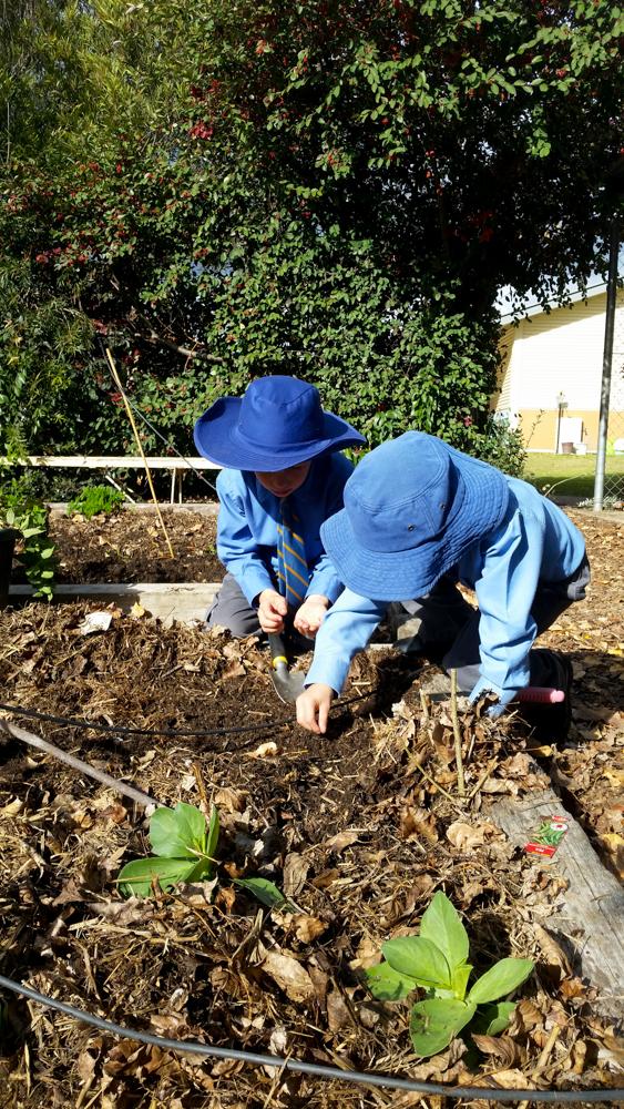 Blog K2G2KA Planting-5